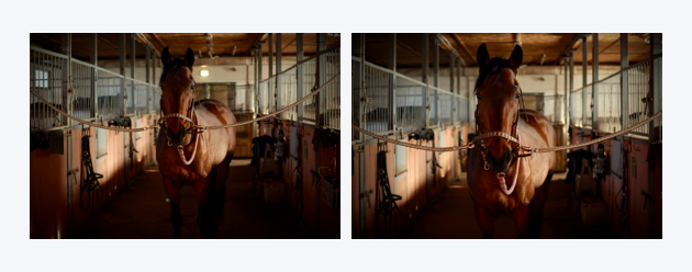 Two duplicate photos of a horse